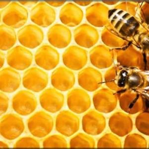 Μελισσοκομικά Προιόντα-Μηχανήματα