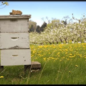 Μελισσοκομικα Εξαρτήματα